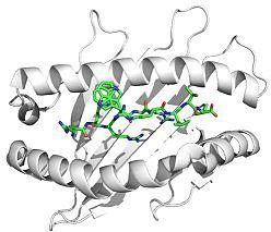 Molekül (Bild: Charité)