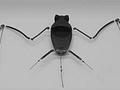 Wissenschaftler entwickeln Fledermausroboter