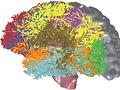 Gehirnimplantat: Licht aktiviert Gehirnzellen