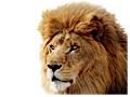 Lion: Mac OS X 10.7 trifft iOS