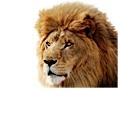 Apple: Zweite Vorversion von Mac OS X 10.7 alias Lion