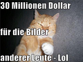 Cheezburger Network: Katzenbilder-Website Lolcat bekommt 30 Millionen US-Dollar