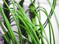Cablecom: Kabelnetzbetreiber erreicht 1,37 GBit/s
