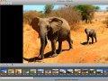Fotoverwaltung: ACDSee nun auch für Macs