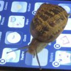 Steve Souders: Das mobile Internet ist zu langsam