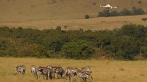 Microdrones md4-1000 über einer Zebra-Herde