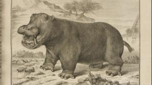 Unter den gescannten Werken ist auch eine Abhandlung über Flußpferde.