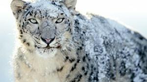 Hintergrundbild Mac OS X Snow Leopard