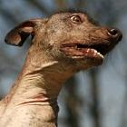 My Social Petwork: Facebook für Hund, Katze, Maus