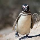Linux 3.1: Erster Release Candidate veröffentlicht