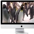 iTV: Steve Jobs wollte Apple-Fernseher entwickeln