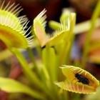 Biomimetik: Robotische Pflanze fängt Insekten