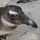 Linux: Entwicklungsphase für Kernel 3.2 abgeschlossen