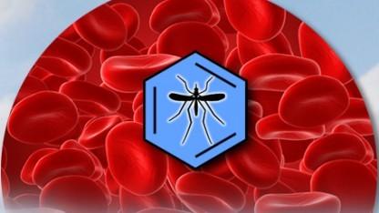 Kampf gegen Malaria: 530.000 Jahre Rechenzeit