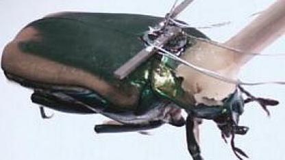 Energy Harvesting im Flug: Käfer mit Generator