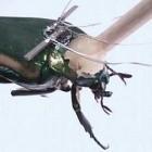 Cyborginsekt: Käfer erzeugt Strom durch Flügelschläge