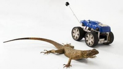 Stabilere Roboter: Tailbot mit dem natürlichen Vorbild