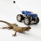 Tailbot: Eidechsenschwanz lässt Roboter stabil fliegen