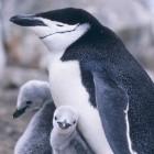 Linux-Kernel: Neue Langzeit-Kernel von Ubuntu