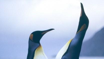 Über einen Fehler im Linux-Kernel ab Version 2.6.39 können Root-Rechte erlangt werden.