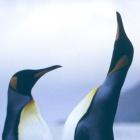 Linux-Kernel: Root-Rechte über Speicher-Exploit möglich