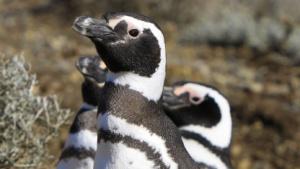 Linux: Erste Vorabversion zeigt Neuerungen im Kernel 3.3