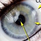 iOptik: Darpa gibt Kontaktlinsen mit Display in Auftrag