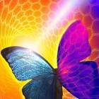 Thermosensor: Schmetterlingsflügel macht Wärme sichtbar