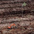 Greenpeace: Acer-Notebooks mit Tropenholz-Verpackung