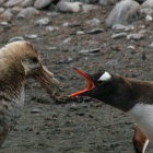 Linux: Kernel 3.3 bekämpft aufgeblähte Puffer