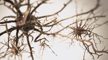 Neuronen: Gehirn mit 16.000 Prozessorkernen simuliert