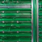 Fraunhofer IGB: Algen produzieren Energie