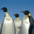 Linux: Kernel 3.5 ist fertig
