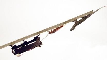 Dash, Küchenschabe, Gecko (Fotomontage): Klettband ersetzt Krallen.