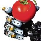 Sensorik: Roboter fühlen besser