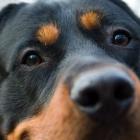 Spezialkamera: Tiere als Fotografen