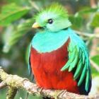 Ubuntu: Zweite Alpha von Quantal Quetzal erschienen
