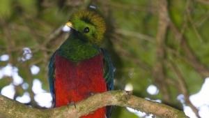 Quantal Quetzal, benannt nach der mittelamerikanischen Vogelart, wird möglicherweise Kernel 3.6 enthalten.