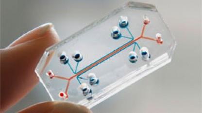 Lunge-auf-einem-Chip: Lebende Zellen