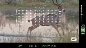 Videos erklären DSLR-Kameras unterwegs.