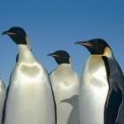 Kernel: Leistungssteigerungen für Linux 3.0 und 3.2