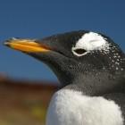 Linux-Kernel: Merge-Fenster für 3.6 nach 12 Tagen geschlossen