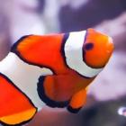 Linux Mint: Nautilus-Fork Nemo für Cinnamon