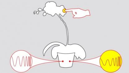 Botanicus Interacticus: spezifische elektrische Eigenschaften