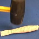Bionik: Meshworm, der robuste robotische Regenwurm