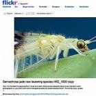 Biologie: Neue Art durch Flickr-Fotos entdeckt