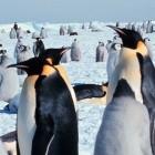Linux-Kernel: Treiber-Backports für alte Kernel
