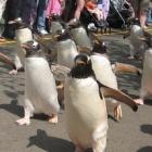 Linux: Kernel 3.4 erhält Langzeitpflege