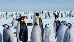 Ältere Linux-Kernel soll auch neue Treiber nutzen können.