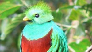 Der Quetzal ist das Wappentier von Ubuntu12.10.